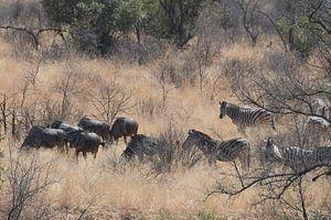 zebra en gnoe van gj heinhuis