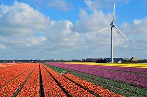 Bloeiend Holland van Hilda Photo