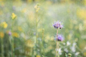 Wilde bloem van Danique van Gurp
