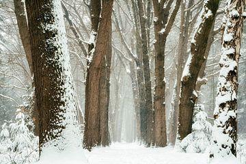 Winter 2021 #2 van Lars van de Goor