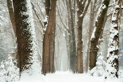 Winter 2021 #2