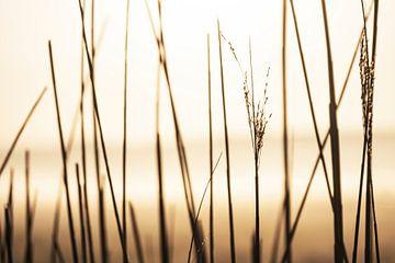 Riet in ochtendgloren van Affectfotografie