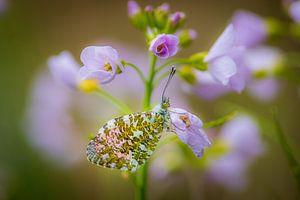 Vlinder op bloem van Adri Klaassen