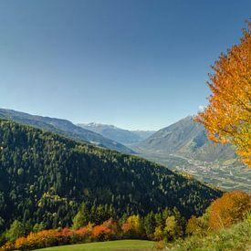 Eenzame herfstboom in de Alpen van Zuid-Tirol van Sean Vos