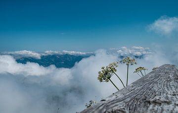 Bloemen met uitzicht over het dal van Martijn van den Hil