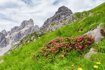Alpenroosjes in het groen van