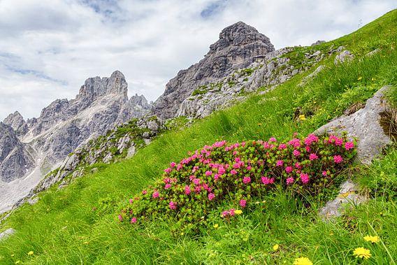 Alpenroosjes in het groen