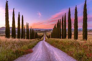 Sonnenaufgang an der Zypressen Allee von Denis Feiner