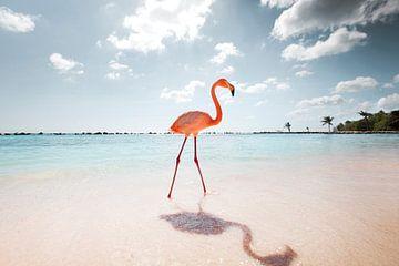 Flamingo-Serie, Der Spaziergang von Claire Droppert