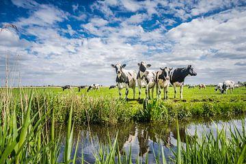 Typisch niederländische Landschaft mit Kühen von Caroline Pleysier