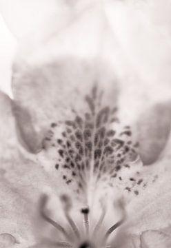 In bloei III von Klaartje Huijben
