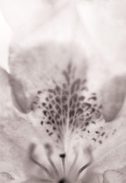 In bloei III van Klaartje Huijben