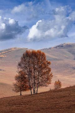 Heuvelachtige landschap met eenzame boom op een steppe van Tony Vingerhoets