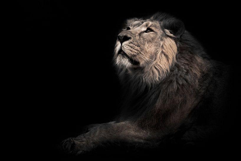 maandier (ashen). Hij snuift zijn hoofd in profiel. Een krachtige mannelijke leeuw met een chique ma van Michael Semenov