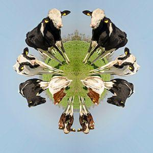 Hollandse koeien van