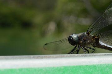 Libelle von Eveline Vermeulen