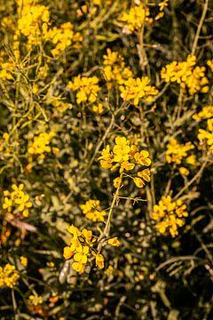 Lage Bergse Bos - Blumen Nr. 1 von Deborah de Meijer