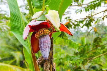 Tropische Blume von Ivo de Rooij
