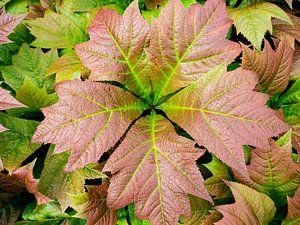 Ster van bladeren