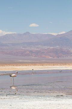 Flamingos auf den Salinen. von Amy Verhoeven