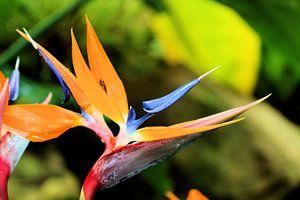 Kleurrijke plant van