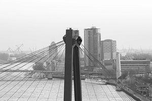 Het kijkje door de Willemsbrug in Rotterdam