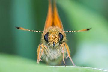 Schmetterling von Kurt Hohenbichler