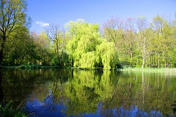 Fresh Green van Hans Winterink