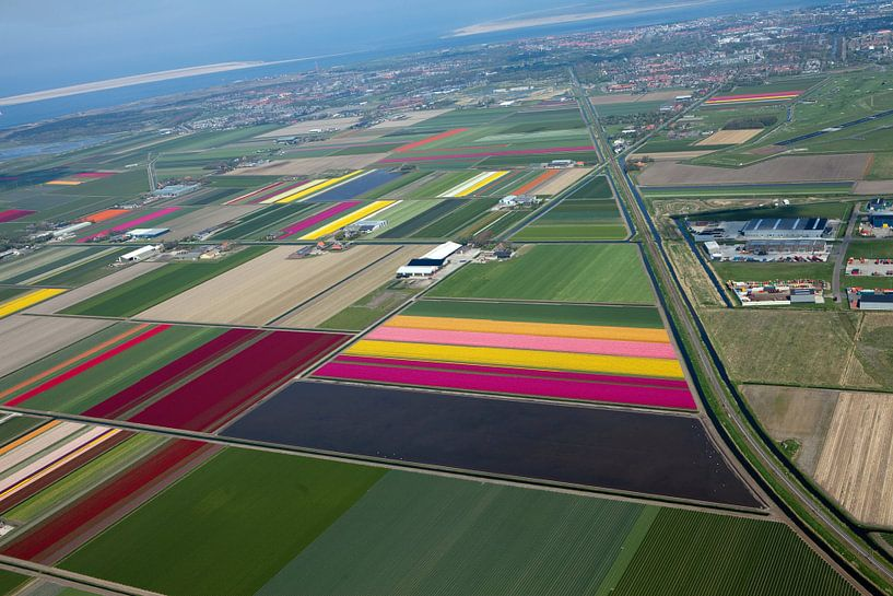 Bloemenvelden vanuit de lucht onder Den-Helder van Arjan Groot