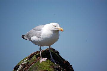Angry bird van Rob de Jong