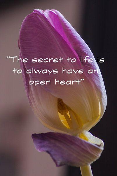The Secret to Life van Pieter Navis