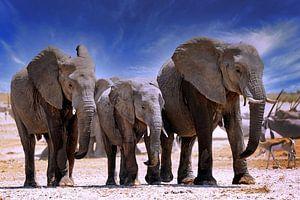 Éléphants de Namibie sur W. Woyke
