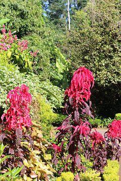 rode plant van Wilma Hage