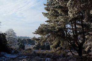 Winter (Drouwen, Drenthe, the Netherlands) van