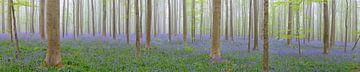 Hyacinten bos panorama von Sjoerd van der Wal