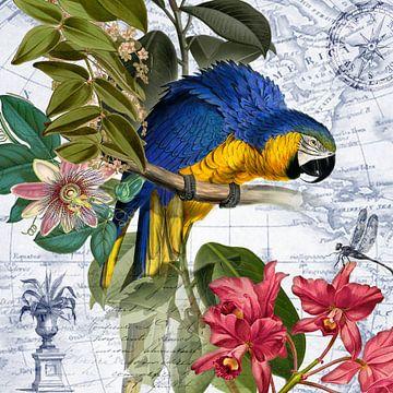 Blauer Papagei von christine b-b müller