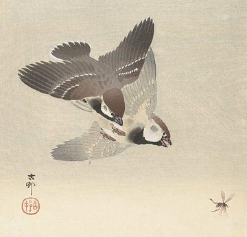 Ringmussen en insect van Ohara Koson