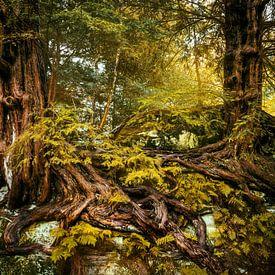 Yew trees van Lars van de Goor