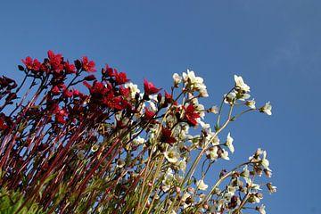 Blumen von EnWout