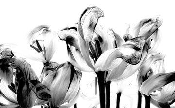 Tulpen in zwart/wit van Iris van Loon