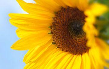 Sonnenblume von Markus Jerko