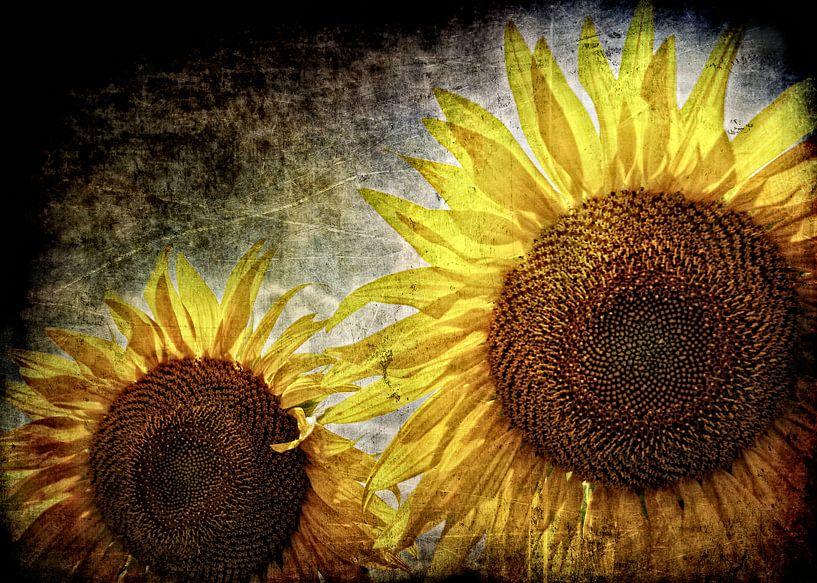 Amazing Sunflowers van Ruud van den Berg