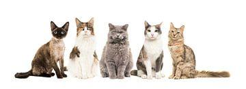 Katzen von Elles Rijsdijk