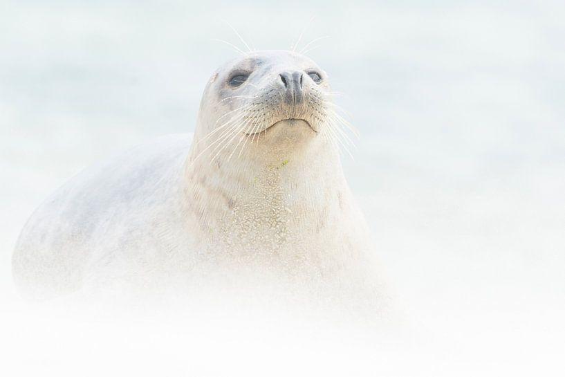 In een zandstorm van Loulou Beavers