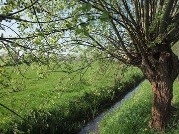 Hollands Landschap von Annie Lausberg-Pater