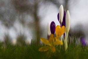 Voorjaar (2) van Willemke de Bruin