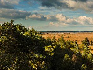 Waar bos in wijdsheid overgaat: het Fochteloërveen