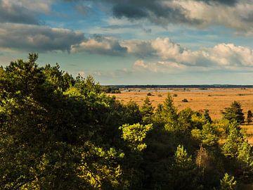 Waar bos in wijdsheid overgaat: het Fochteloërveen van Anneriek de Jong