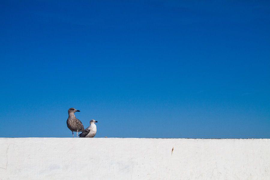Zeemeeuwen op een kademuur van Johan Zwarthoed