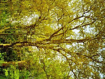 Tree Magic 161